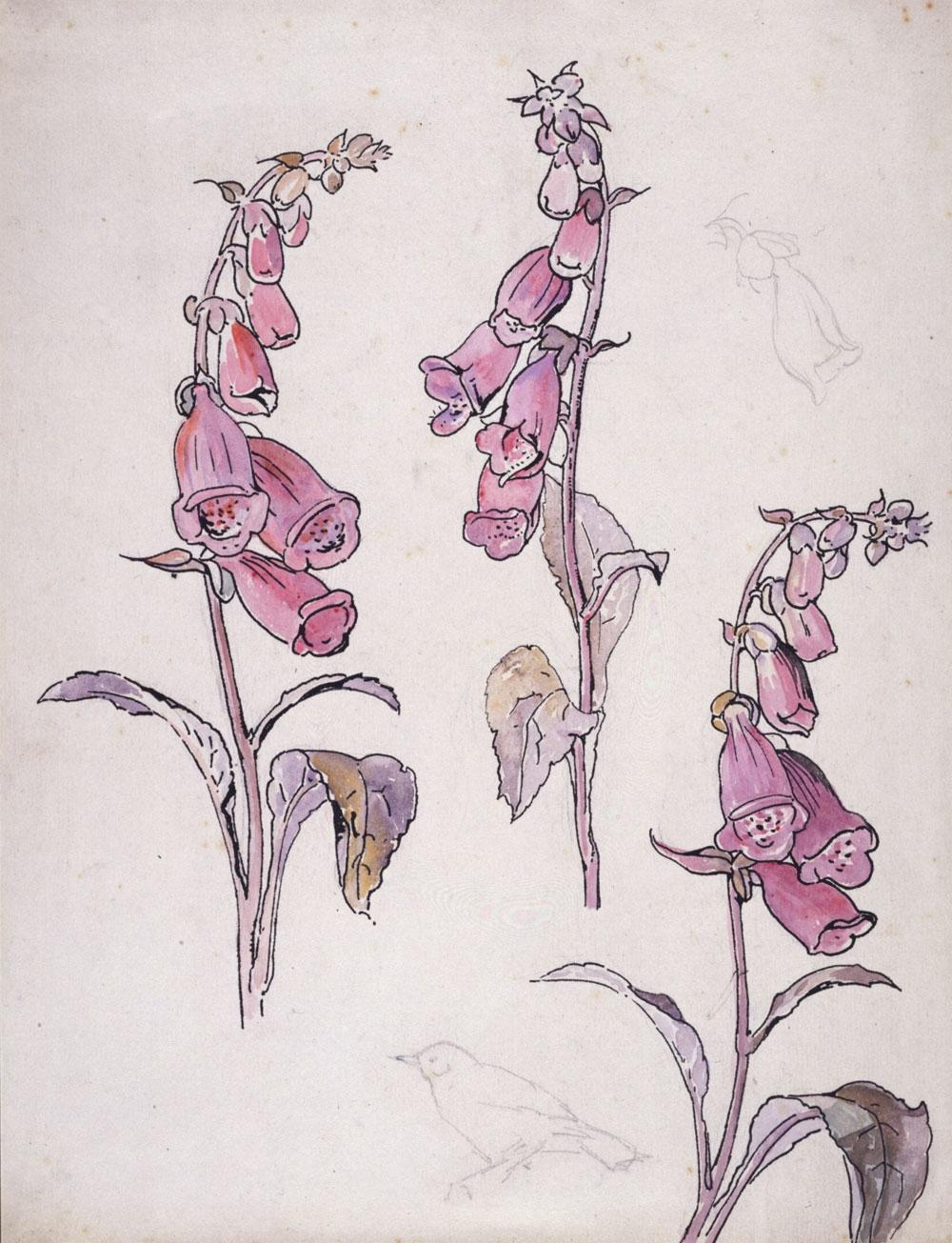 Fox gloves drawn by Beatrix Potter