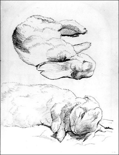 Black and white sketches of rabbits by Beatrix Potter