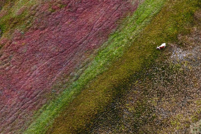 South Africa from above earthy colours and a cow