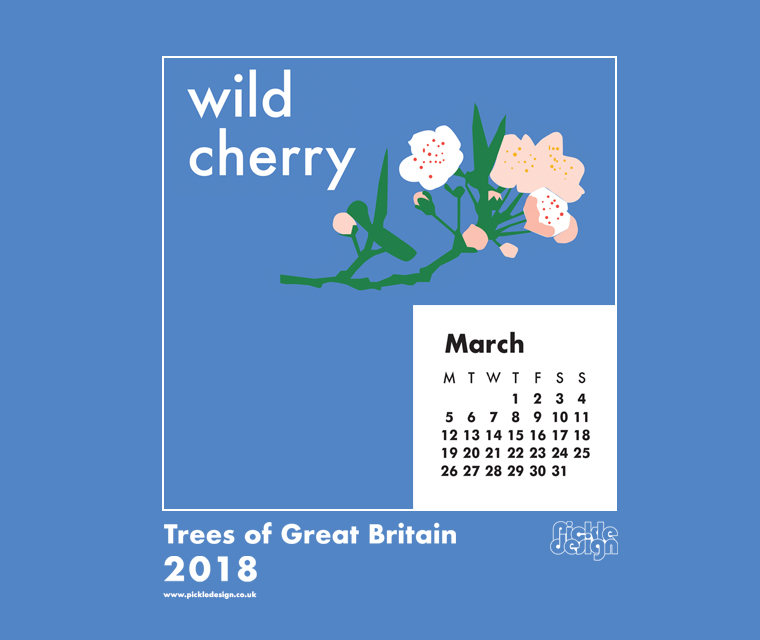 The Pickle Design March 2018 British Trees calendar download featuring illustration of the Wild Cherry tree