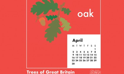 You can download our April calendar illustration of the Oak tree for your desktop, mobile or tablet