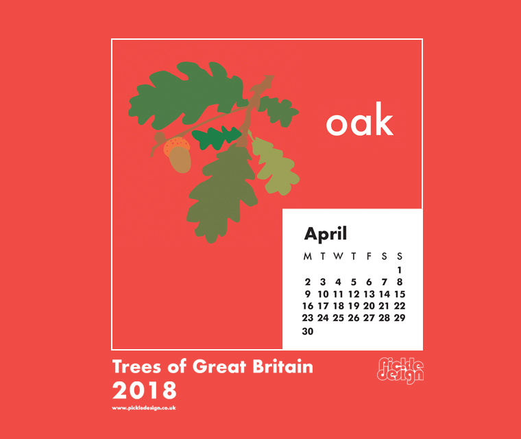 You can download our April calendar illustration of the Oak tree for your desktop, mobile or tablet