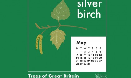You can download our May calendar illustration of the Silver Birch tree for your desktop, mobile or tablet