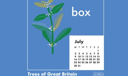 You can download our July calendar illustration of the the Box tree for your desktop, mobile or tablet