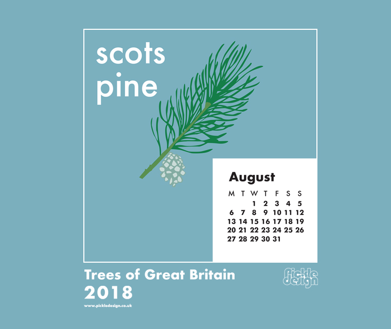 Download our August calendar with our retro style illustration of the Scots Pine from our pick of Great British Trees
