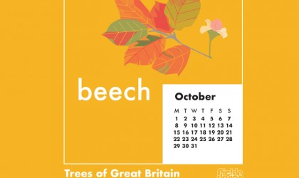 Download our October calendar with our retro style illustration of the Beech tree from our pick of Great British Trees