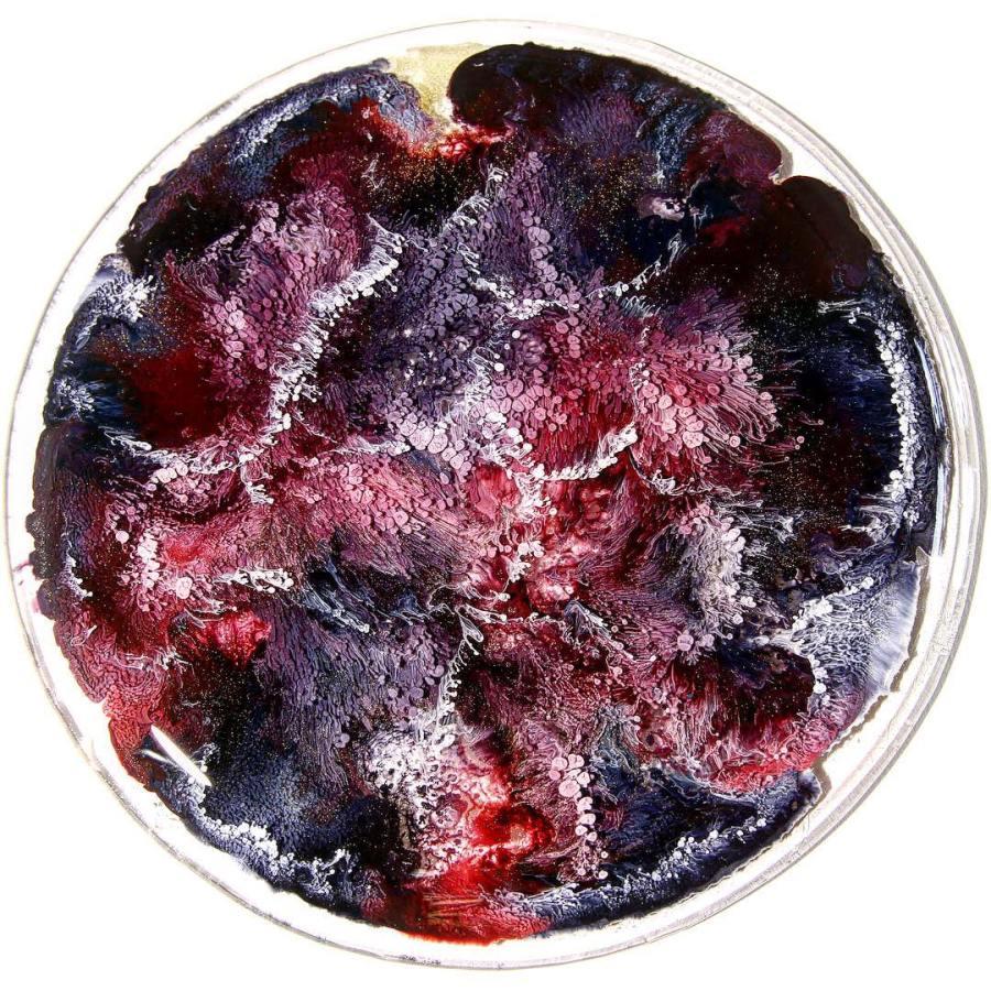 Josie Lewis artist's petri dishes